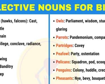 Collective Nouns for Birds in English 6
