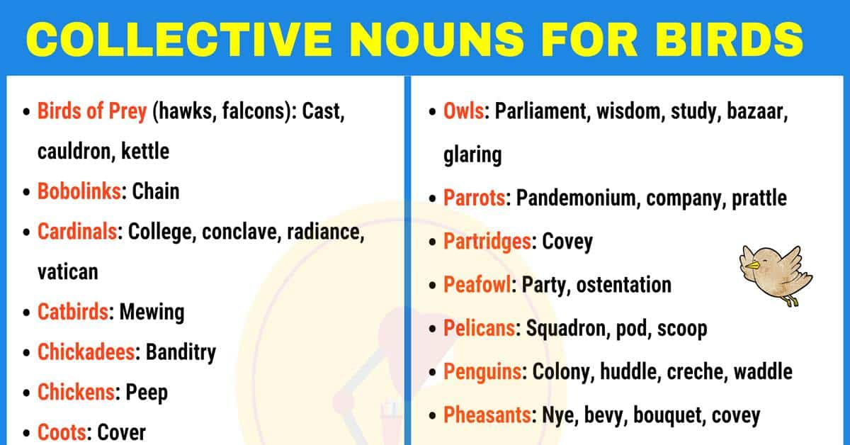 List of Important Collective Nouns for Birds in English 1