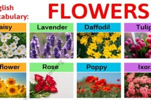 Types of Flowers: Learn Different Flower Names with The Picture 2