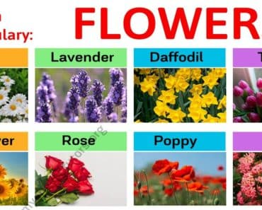 Types of Flowers: Learn Different Flower Names with The Picture 1