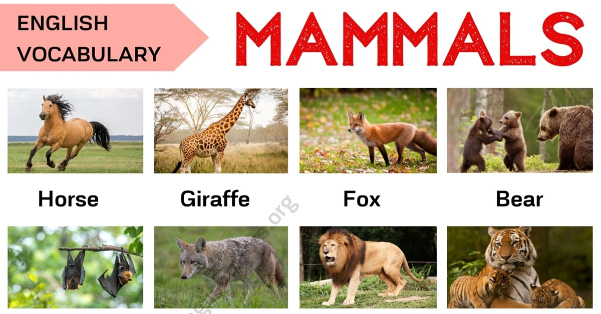 Mammals: List of Mammal Names in English with ESL Picture! 1