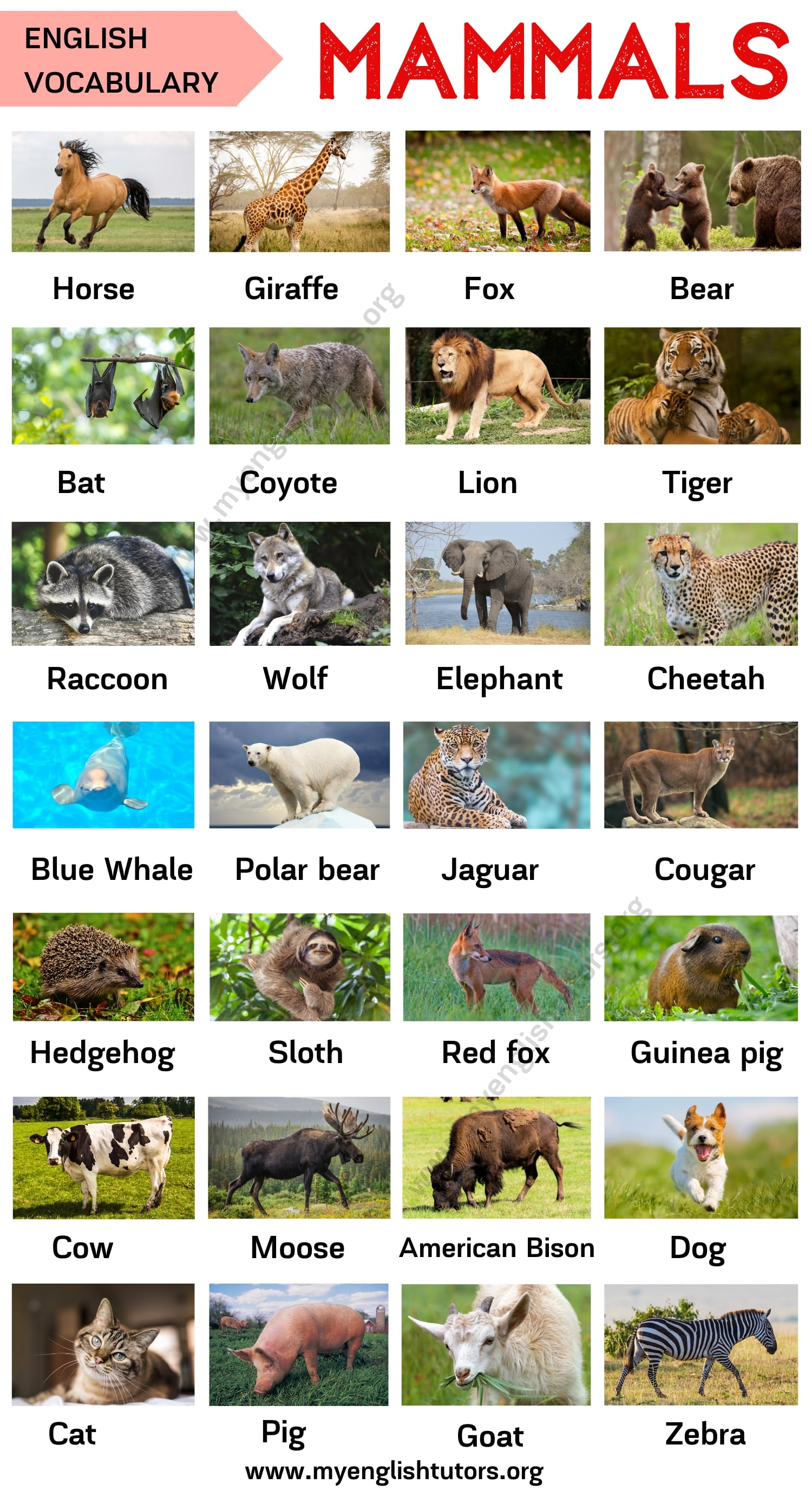 Mammals: List of Mammal Names in English with ESL Picture!