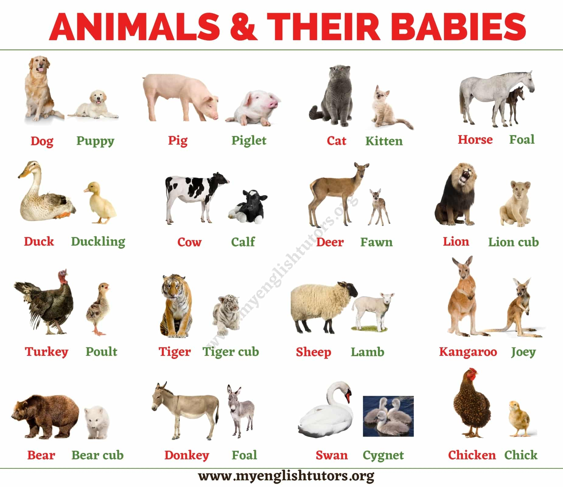 List of Animals: An Ultimate List of Animal Names in English