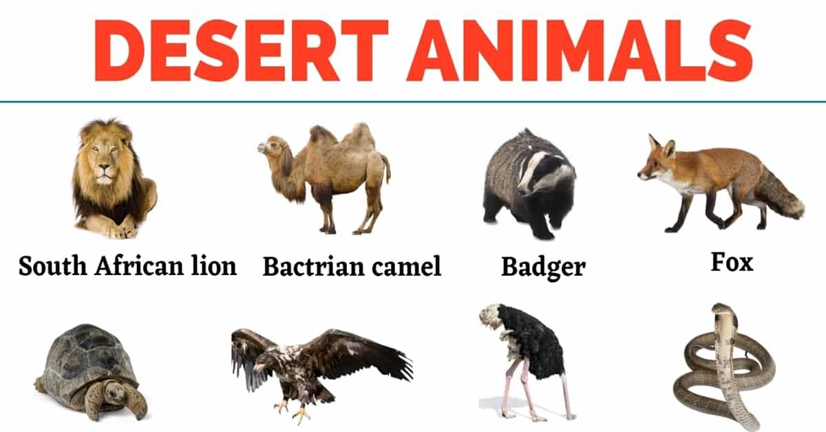 Desert Animals: Top 35+ Animals that Live in the Desert 1