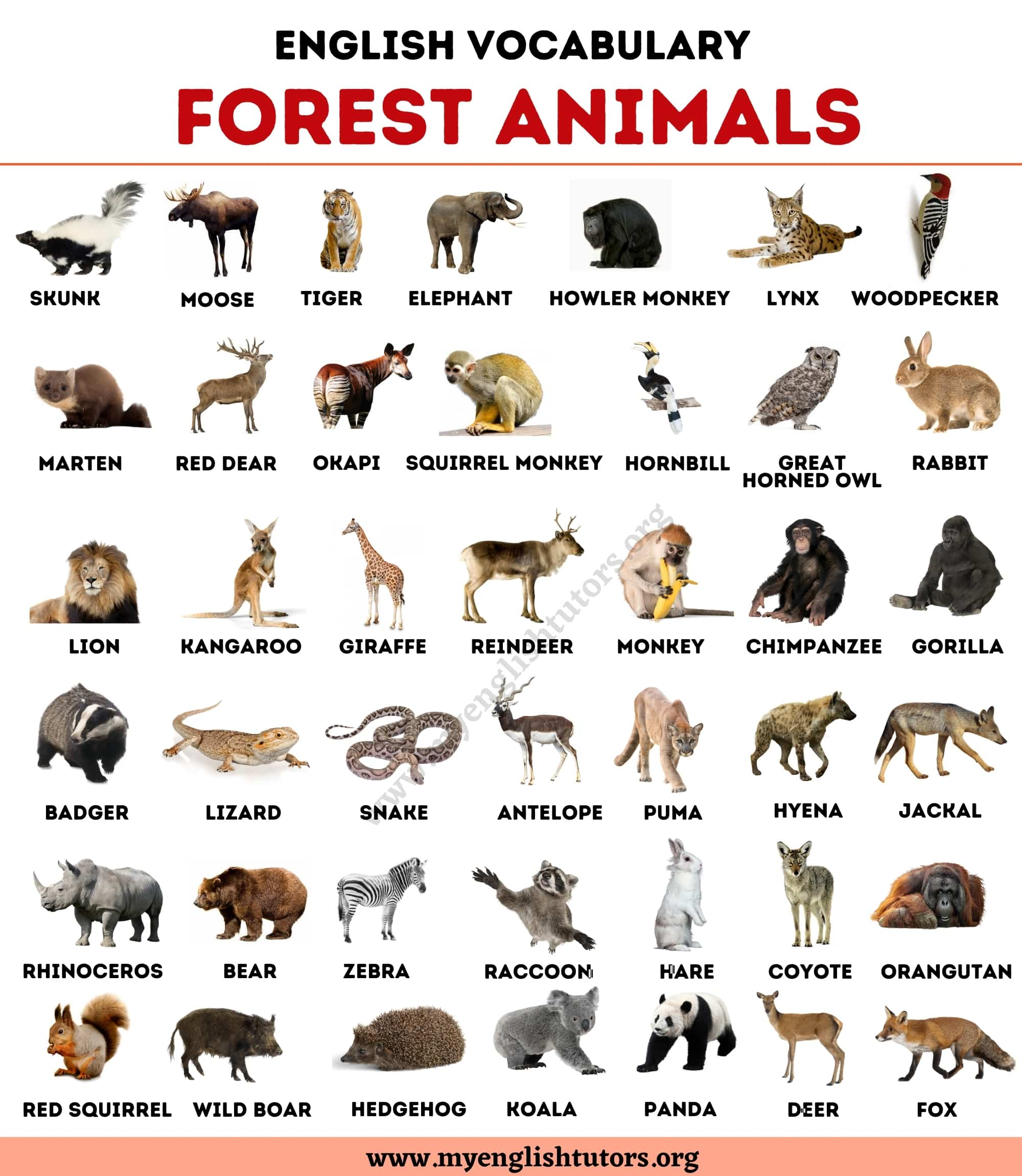 Forest Animals List Of 40 Animals Living In The Forest My English Tutors
