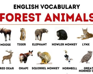 Forest Animals: List of 40+ Animals Living in the Forest 4