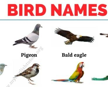 Bird Names: List of 30+ Names of Birds in English with the Picture 6
