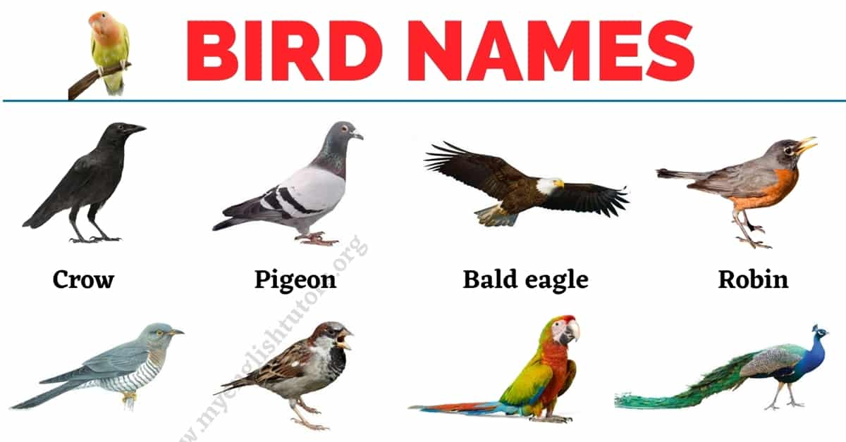 Bird Names: List of 30+ Names of Birds in English with the Picture 1