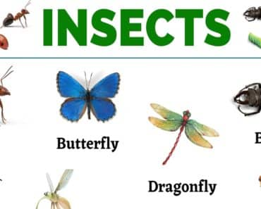 Insects: List of 20+ Names of Insects in English 1