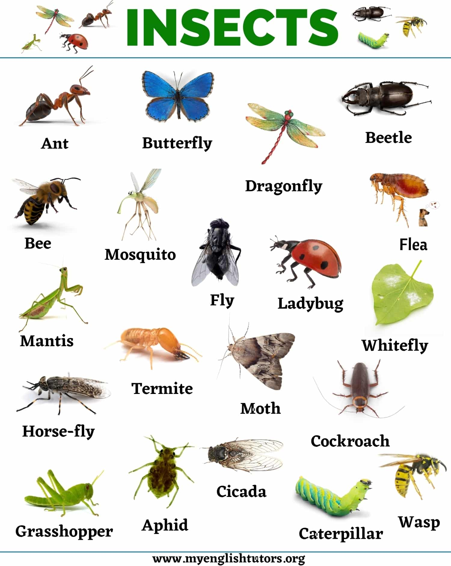 Insects: List of 20+ Names of Insects in English