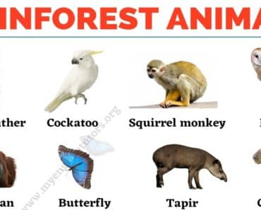 Rainforest Animals: List of 25+ Animals that Live in the Rainforest 4