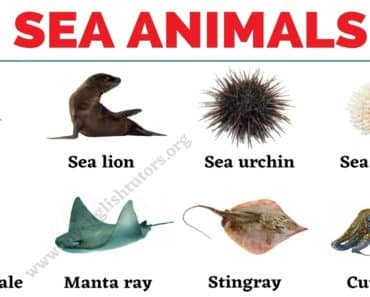 Sea Animals: List of 25+ Animals that Live in the Sea with the Picture! 5