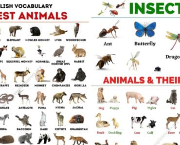 List of Animals: An Ultimate List of Animal Names in English 1