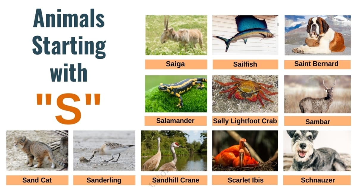 Animals that Start with S | A Huge List of 1000+ Animals Starting with S 1